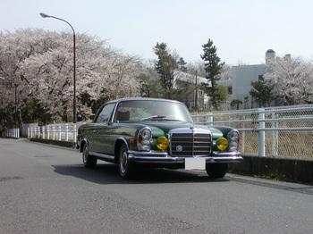 1桜とベンツ改.jpg