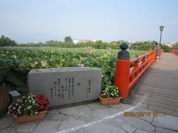 1、高田公園の蓮.JPG
